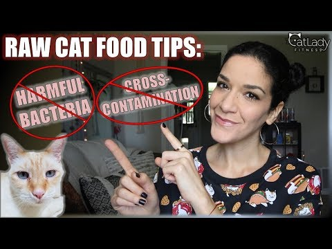 Making Raw Cat Food: Tips to buy fresh meat & avoid cross-contamination! - Cat Lady Fitness