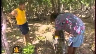 Mohamed et la chèvre - koh lanta 5