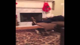 Christmas Kitty Surprises Man on Recliner