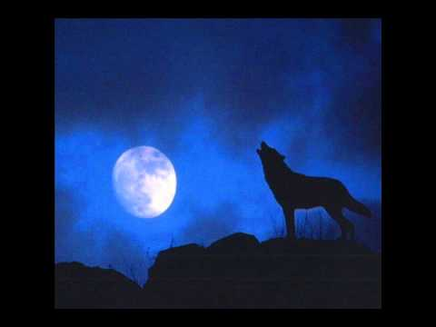 Wolf howling at night sound effect