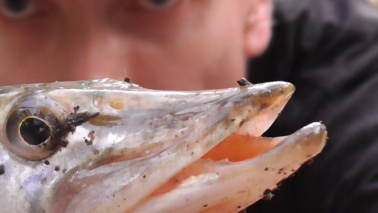 Рыбалка. Щука любит это! Ловля щуки на живца поплавочной удочкой