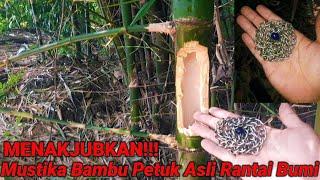 MENAKJUBKAN!!! Bambu Petuk Asli Ada Mustika Rantai Bumi Di Dalamnya
