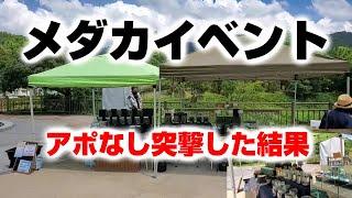 【メダカ】イベントにアポなし凸した結果【即売会】