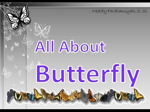 All About Butterfly