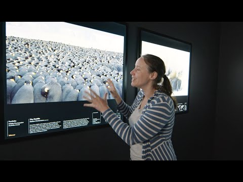 Curator-led Tour Of The 55th Wildlife Photographer Of The Year Exhibition