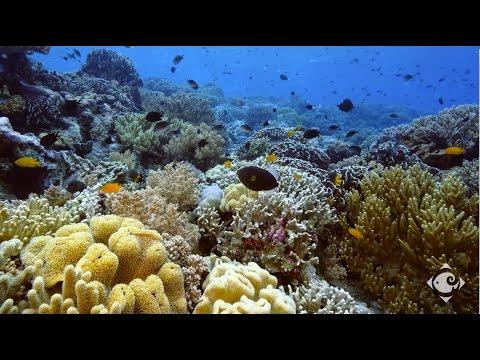Wakatobi's Underwater World