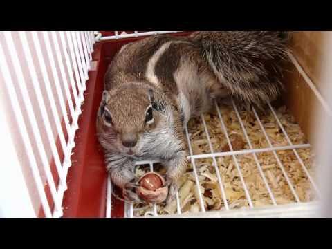 zarloul mon ecureuil : touzani mounir