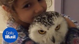 Cute little girl kisses and hugs her pet owl - Daily Mail