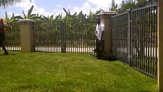 Attack Dog Training In Miami K9 Enforcement ,german Shepherd