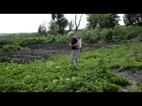 Украина, днепропетровск. Несколько лет назад моя коллега порекомендовали мне использовать микробиологической удобрение байкал эм1 для повышения урожайности. Среди огромного количества биопрепаратов для огорода самым популярным, без сомнения, является препарат байкал эм 1.