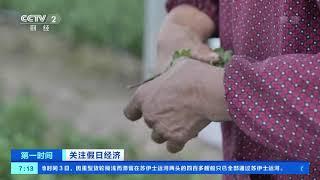 [第一时间]关注假日经济 出口订单不减 浙江菊花迎种植旺季  CCTV财经 - YouTube