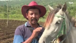 مكتبة متنقلة على حصان للتشجيع على القراءة للأطفال في اندونيس