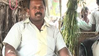 Pasumai Neram - Jamnapari goat