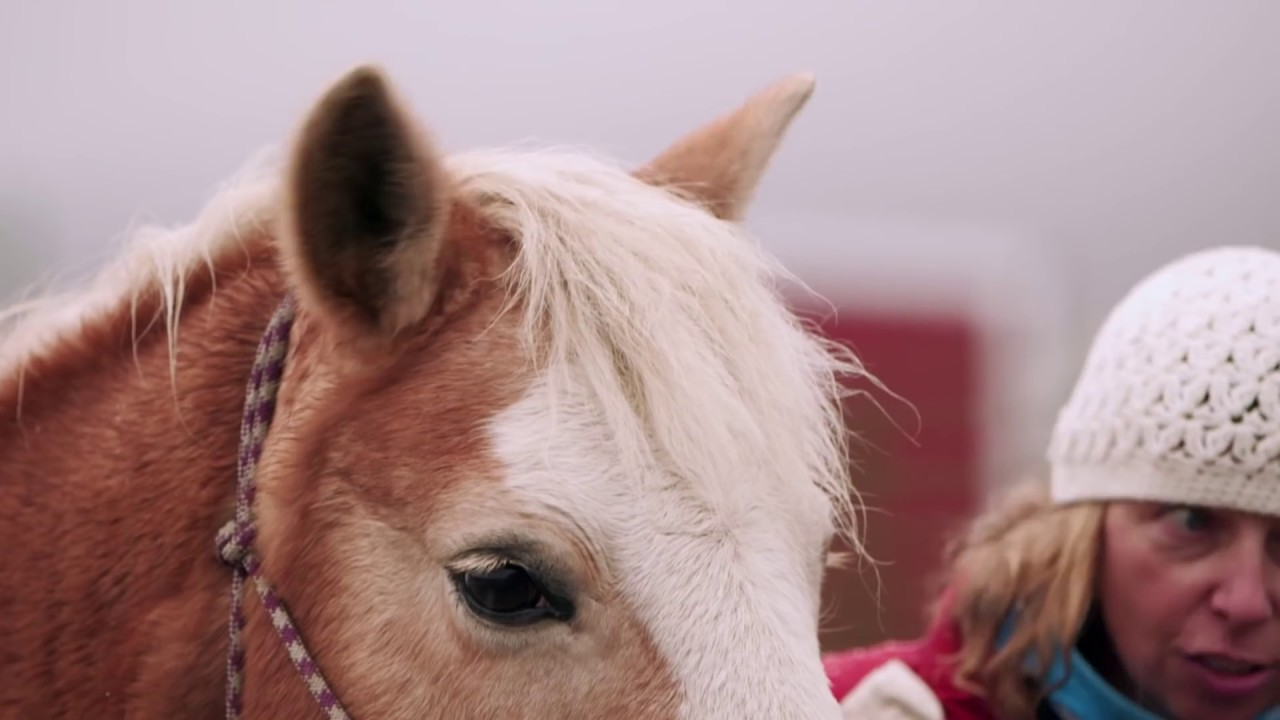 Clydesdales help Purina deliver surprise to horse shelter in need & Clydesdales help Purina deliver surprise to horse shelter in need ...
