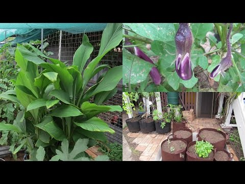 Backyard Farm garden update. Air Pruning, Compost & plans for the patch, 18th Dec 2014..