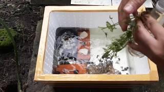 NTN để làm hồ cá thùng xốp ngoài trời giá học sinh.