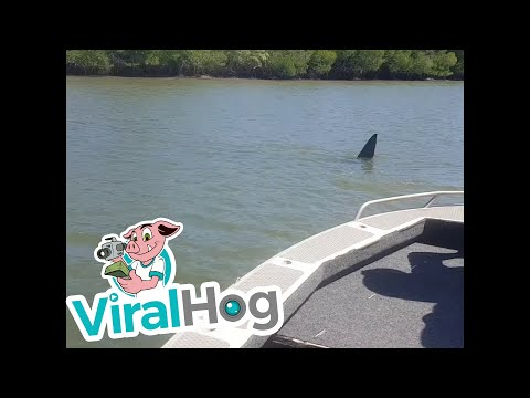 Huge Shark Swims By Fishing Boat || ViralHog