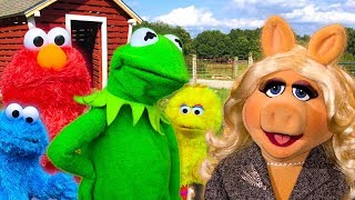 Kermit the Frog meets Miss Piggy at the Petting Zoo! Ft Elmo, Cookie Monster & Big Bird thumbnail
