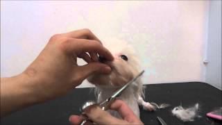 體驗寵物美容師的第一人稱視角-夢想寵物美容
