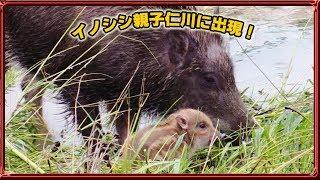 2018年7月6日、近畿地方に大雨が降りました。宝塚市の仁川もいつもと...
