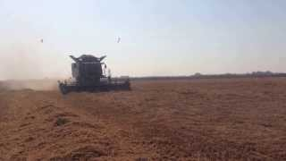 John Deere S690i Harvest Rice In Thessaloniki Kimina Greece