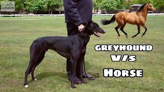 Greyhound V/S Horse Who Will Win ? Comment Below koun / JITEGA BHAILOG BATAO