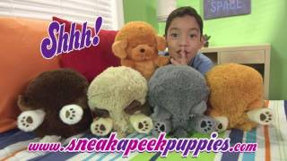 SneakAPeekPuppies v8 WEB 1
