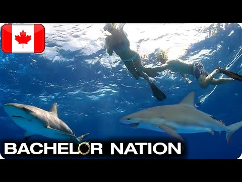 Tim Shocks The Girls With Shark Diving Date!   The Bachelor CA