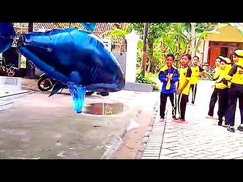 Balon Gas Mainan Anak - Balon Karakter Hiu - Qyla Bermain Air Swimmer Shark: Balon Gas Mainan Anak-anak - Balon Karakter Hiu (Shark), Qyla Bermain RC Air Swimmer Shark. Balon Mainan Anak-anak Remote Control Air Swimmer Shark, Qyla sedang asik bermain Balon Karakter Hiu / Air Swimmer Hiu