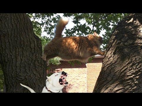 Смешные коты убойные приколы за 30 августа