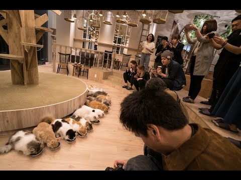 Thumbnail: CAT CAFE IN JAPAN