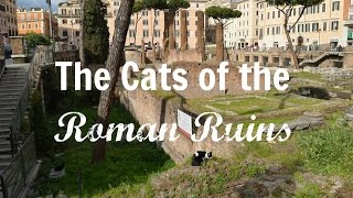 The Cats of the Roman Ruins