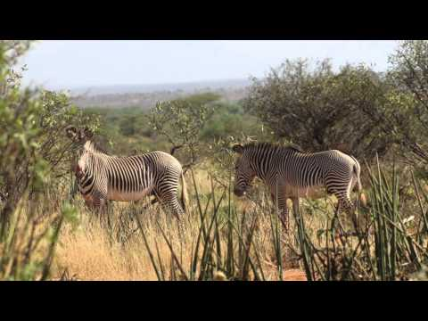 Il Ngwesi Conservancy's 20 Years of Maasai Eco-tourism in Kenya