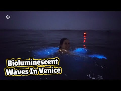 Incredible Moment Bioluminescent Waves Wow Venice Beach Surfers