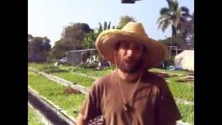 Big Heart/Big Island with Living Aquaponics