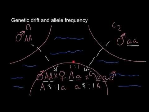 What is genetic drift and how it influence allele frequency
