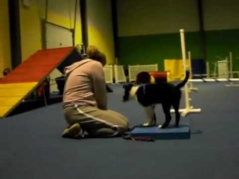 Puppy Agility - First Class