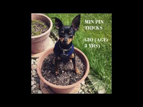 Min Pin Tricks & Commands