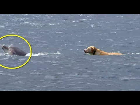 This Dog Kept Swimming Out Into The Ocean. Then His Owner Realized The Astonishing Reason Why