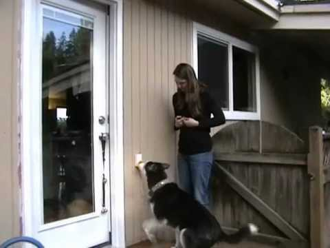 Trianing Your Dog To Ring The Pebble Smart Doggie Doorbell Youtube