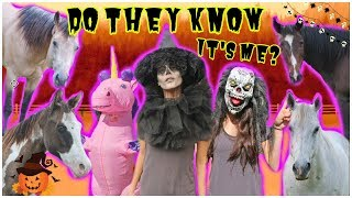 Can My HORSES RECOGNIZE ME In My Halloween Costumes?