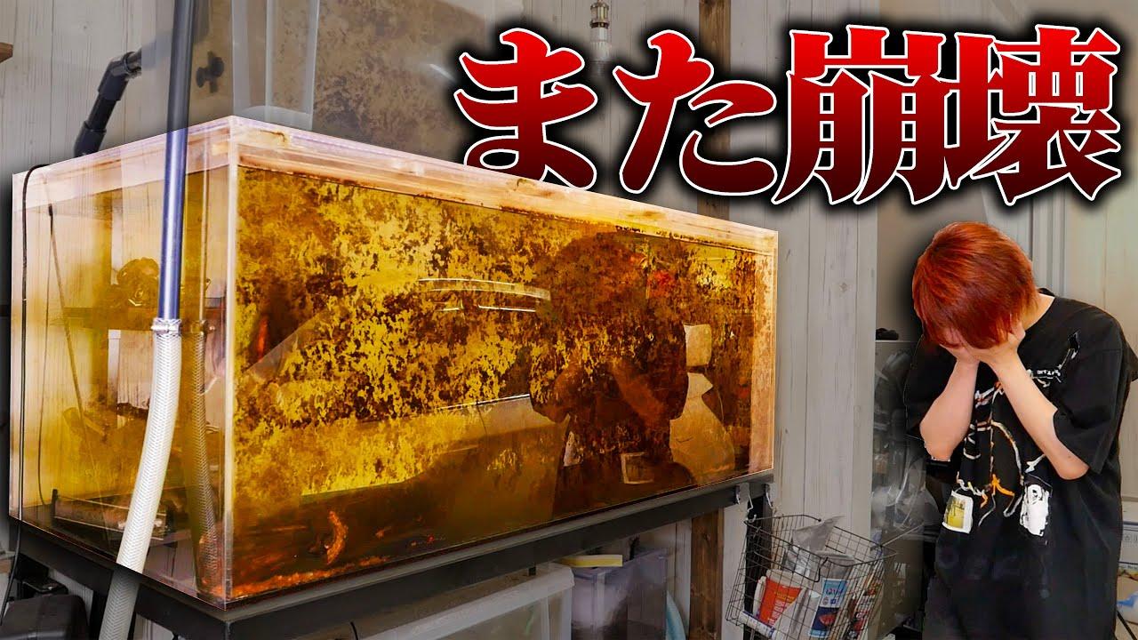 【謝罪】3ヶ月放置した古代魚水槽が崩壊してしまいました。