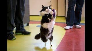 КОТ С ПРОТЕЗАМИ ВМЕСТО ЛАП !!! Врач постарался и сделал искусственные лапы у кота