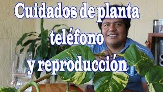 Cuidados a planta teléfono y reproducción