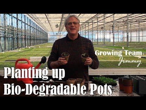 How to Plant up Bio-Degradable Pots