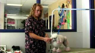 Dog Grooming : Poodle Dogs Grooming Styles