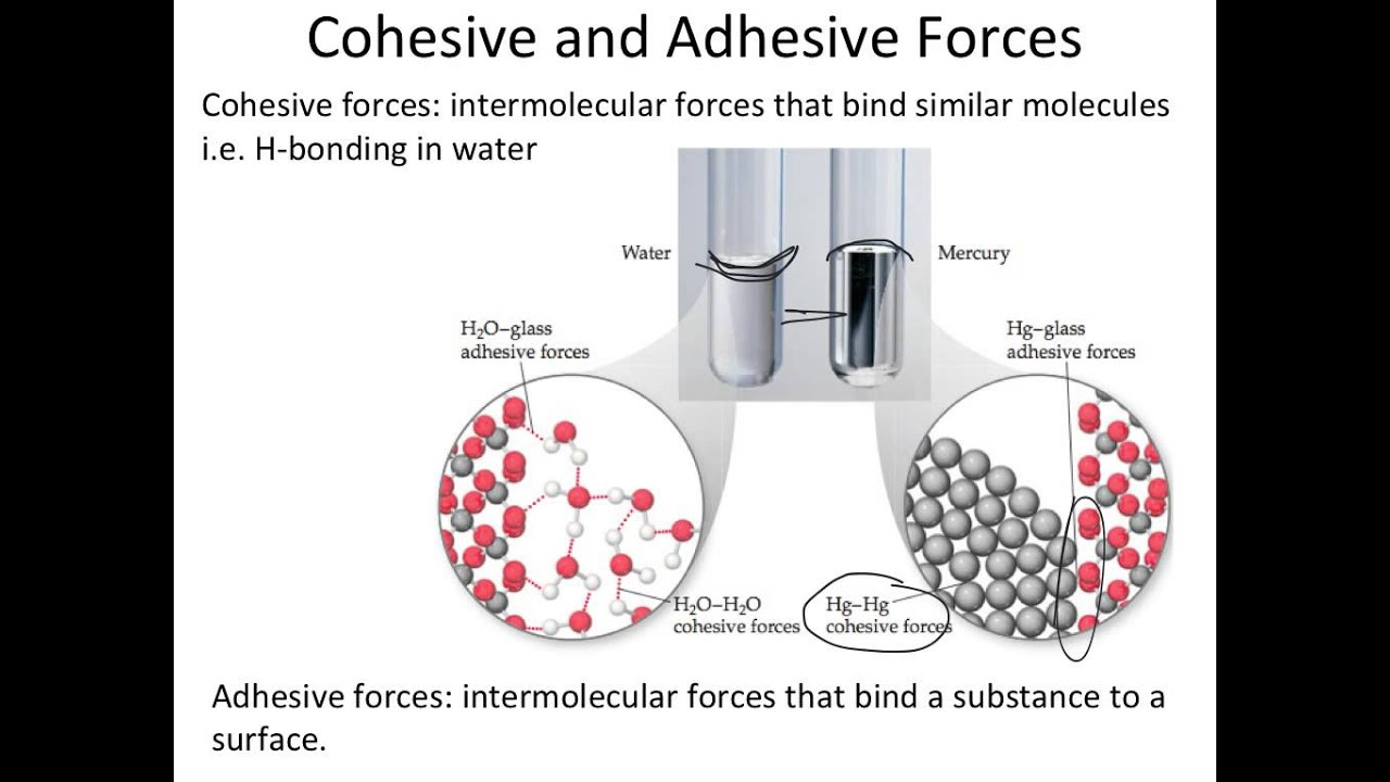 understanding cohesive forces and adhesive forces between particles Surface tension is the energy required to increase the -surface tension is the energy required to has stronger adhesive forces than cohesive.
