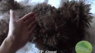 [01.08.10] [Sub/Español] Kim Hyung Joon Video SELKA