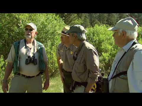 Yellow Warbler - Rocky Mountain National Park