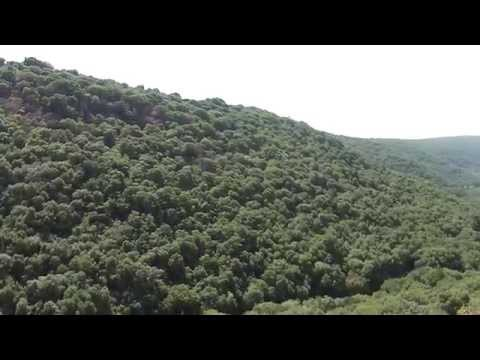 Beautiful Green Monfort Forest, In Israel